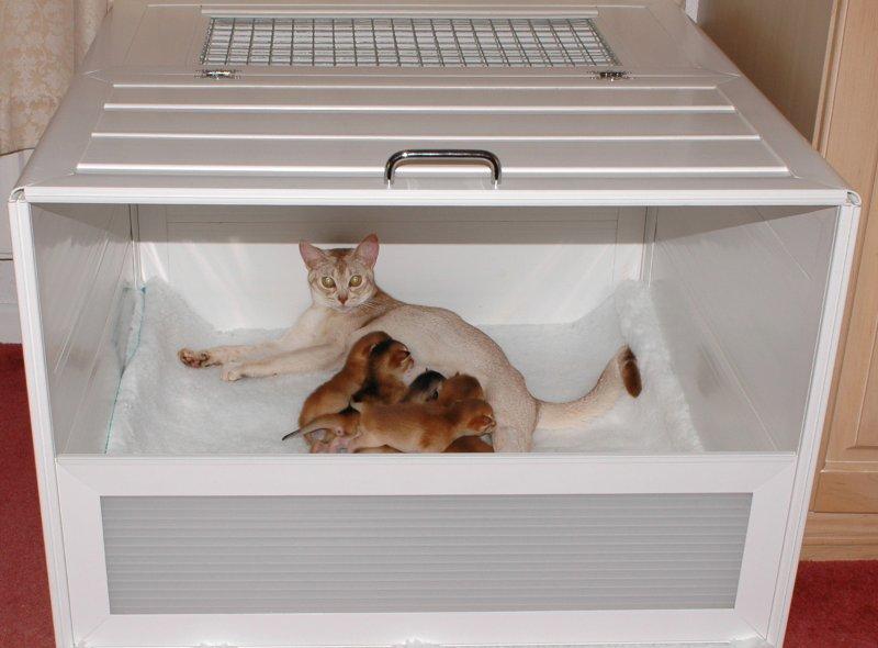 Cat Whelping Box Uk